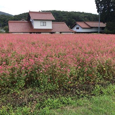 赤蕎麦の里に行く途中の畑です(直ぐ近く)