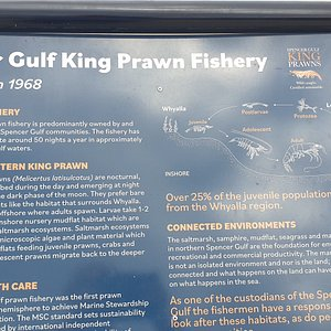 Whyalla Jetty  SA   Prawn industry information