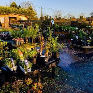 Woodhouse Green Nurseries