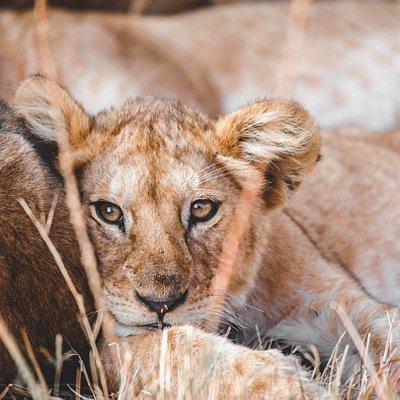 Cute cub posing for a shot