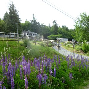 Entrance to Marshall-Inman Gallery.   Wood and Pottery Workshops adjacent to Gallery.  Situated on a small llama farm overlooking the Juan de Fuss Strait on the SW coast of Vancouver Island. Our work is sold exclusively through our our gallery,