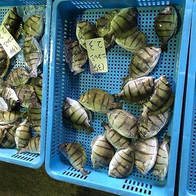 沖永良部島漁協では、月曜日〜土曜日の午前9時からセリをしています!仲買人のセリ風景は、圧巻です!!見学は自由ですので、沖永良部島にご来島の際は、ぜひ、お立ち寄りくださいね!!