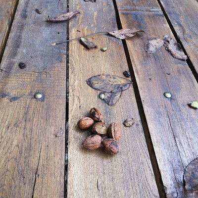 Nuts in autumn