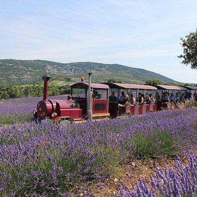 Petit tour en Train des Lavandes, inclus dans la visite !