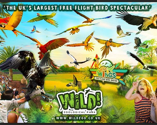 The UK's biggest and most spectacular free flight bird show