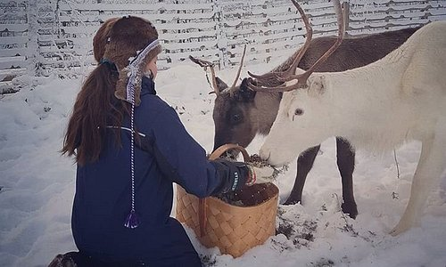 Our daughter feeding our reindeer.