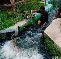 "Warga Kampung Mrican, Giwangan, Umbulharjo, Yogyakarta, punya ide kreatif menyulap saluran irigasi yang dulunya kumuh menjadi sebuah destinasi wisata baru. Saluran irigasi itu awalnya merupakan bagian dari aliran sungai yang kumuh, kotor, banyak sampah, dan punya bau menyengat. Saluran irigasi itu berfungsi untuk mengaliri lahan sawah di daerah Bantul.  Tapi kini saluran air yang kumuh itu kemudian berubah menjadi objek wisata.  ""Warga memberikan nama Bendung Lepen Mricanyouth Kali Gajah Wong,"""