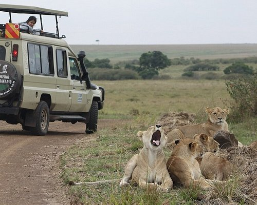 Rekero Pride Masai Mara. So lucky to see these guys on our last morning game drive