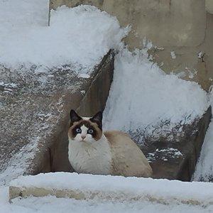 고양이 너구리...