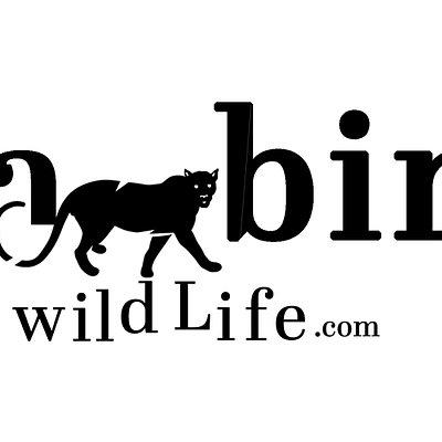 Kabiniwildlife.com