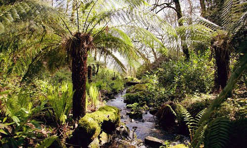 The Victorian Fern Garden,  located in a hanging valley. Look out for the fairies!