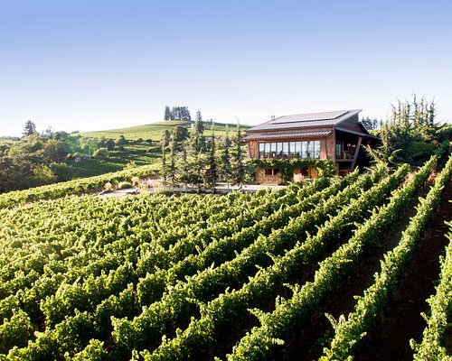 Our Rambouillet Estate Vineyard located in the Dundee Hills AVA.