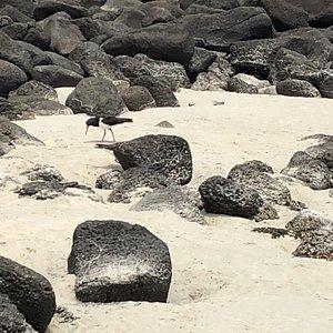 Pea Soup Beach