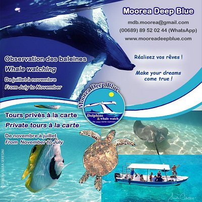 baleine / whale / snorkeling / Moorea