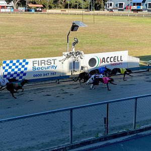 Whanganui Greyhounds - Friday Nights from 4.30pm