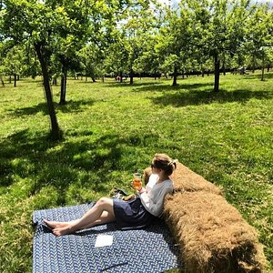 A photo taken from our Orchard Open Day 2020