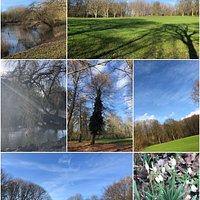 Het Elsenburgerbos