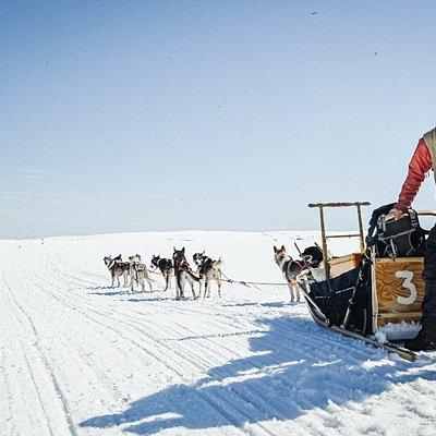 Dogsledding Fulufjället
