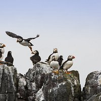 Puffins lining the cliffs