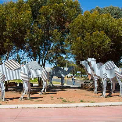 Camels roundabout