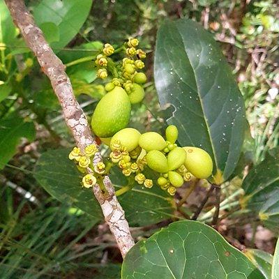 Sentier botanique avec de multiples espèces endémiques et autochtones