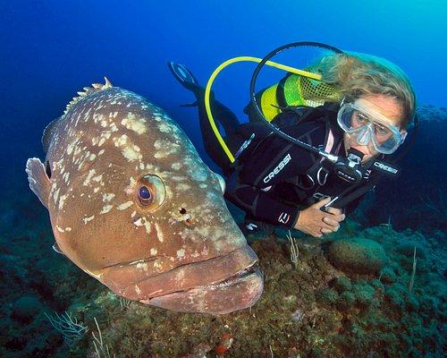 Soy Gemma Aymerich,  me apasiona bucear y poderos enseñar nuestros bonitos fondos submarinos de las Islas Medes y de la Costa del Montgrí.