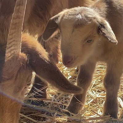 1 day old kid!