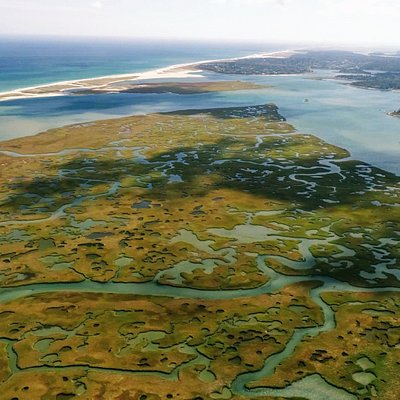 The channels of Nauset Marsh