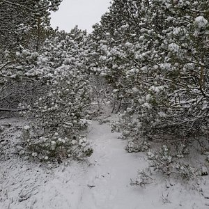 Sne i skoven - parker ved skovkanten og gå ind til Spidsbjerg i flot natur og forskel på træ, buske og små søer