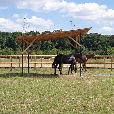 Beautiful  horses you can horseback ride at Hobby Land Ranch in Ganeasa, Ilfov.