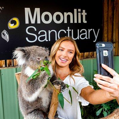 Koala encounter give you the best selfies