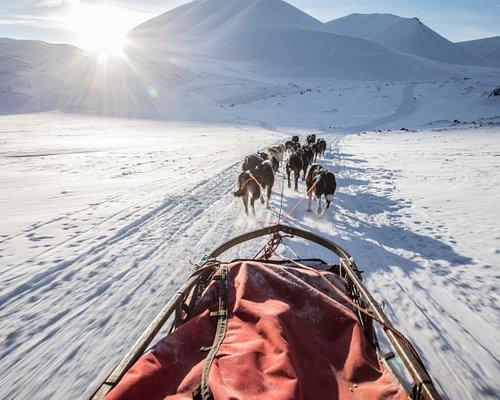 The amazing feeling og gliding through the snow behind a dog team.  Copyright: John Campbell