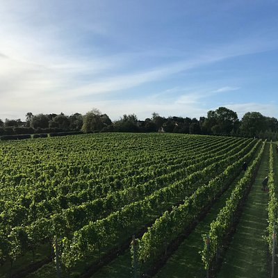 One of the most northerly commercial vineyards in the UK