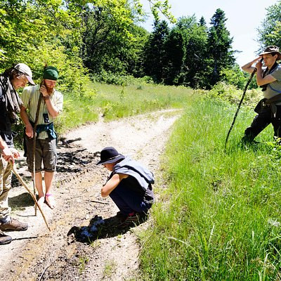 1. Learn about wilderness on the grassroots of nature conservation. Learn about bison's importance to the ecosystem, guided by the local bison rewilding team and experienced nature guides. Track and trail wild bison while uncovering signs of their behaviour and role in the food chain.   2. Connect to nature. Learn how to interpret and identify the actors of flora and fauna on the stage of the Romanian wilderness   3. A taste of the traditional way of life. Get glimpses of the traditional lifesty