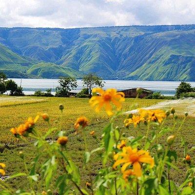 Uniknya Pulau Samosir membuat banyak wisatawan harus datang kembali setelah mengunjungi Pulau Samosir. Pulau ini berada di tengah danau Toba yang luas itu.