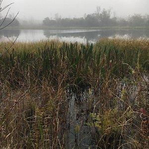 One of many ponds.