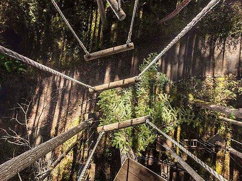 Log bridges on the adventure course