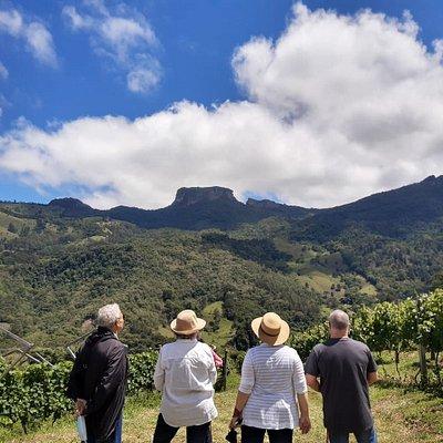 Foto do Tour pelo Vinhedo com Degustação no vinhedo de chardonnay e syrah, com Pedra do Baú como vista perfeita