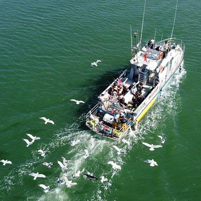 L'Ami du Pêcheur Pêche en mer