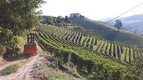 ..the vineyards