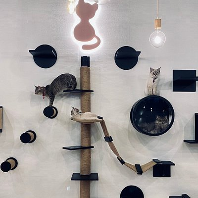 The famous cat wall