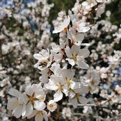 La primavera.