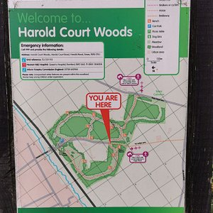 Tuesday 30th June 2020 Walk around Harold Court & Pages Woods
