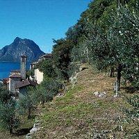 Parco degli ulivi (Lugano - Castagnola - Ticino)