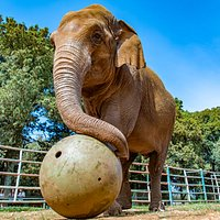 Lanka elephant - photo: Nataša Sundara