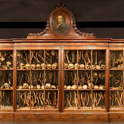 Copyright Frank Wiersema. This is the cabinet of Dr Jacob Hovius, an original 18th-century cabinet made for the bone collection of this physician. Hovius collected diseased bones, and in this cabinet you can see more than 500 specimens. You can find examples of - among others - syphilis, cancer, trepanation, severe trauma including fatal wounds inflicted by murderers, scoliosis/kyphosis and much, much more.