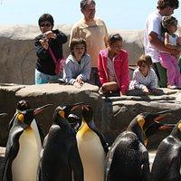 pingüinera