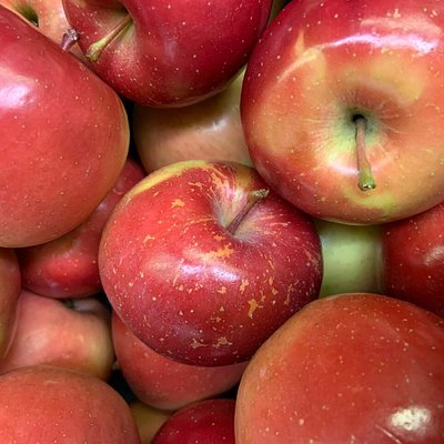 We grow over 50 different varieties of apples. These are Evercrisp. A sweet and crunchy apple with a lot of flavor. We offer samples of all of our varieties so you find the right one.