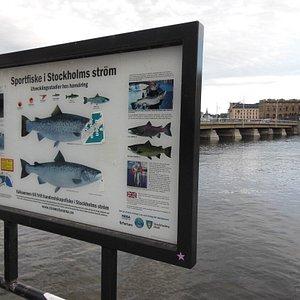 Cartello sulla pesca del salmone e sullo sfondo il ponte