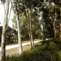 path past shade trees